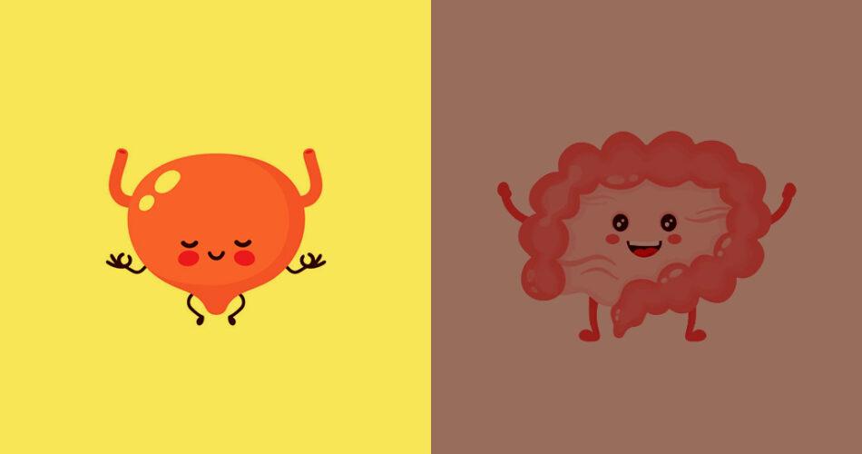 bladder and gut